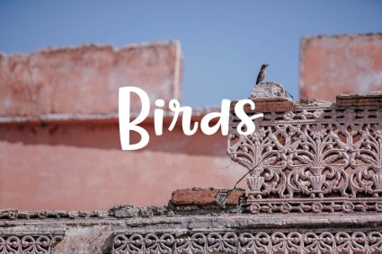 pictures-of-birds-min