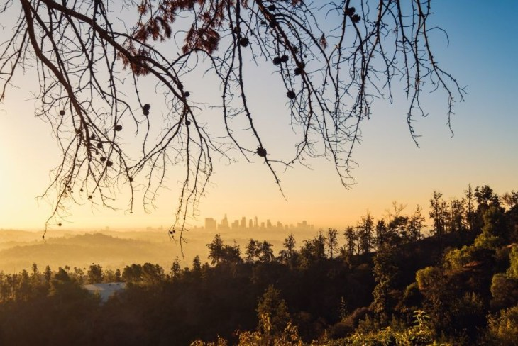 los-angeles-skyline-at-sunrise-with-trees-in-PPBX394