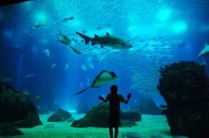 Oceanario de Lisboa Lisbon Aquarium