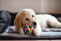 A Beginner's Guide to Getting Your First Dog