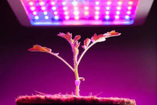 LED Indoor best grow lights