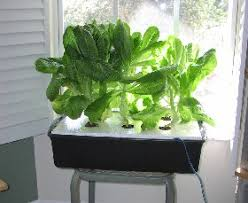 How To Build A Hydroponic System At Home Diy Hydroponic Systems