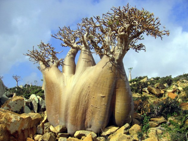 Archipelago de Socotra, Yemen