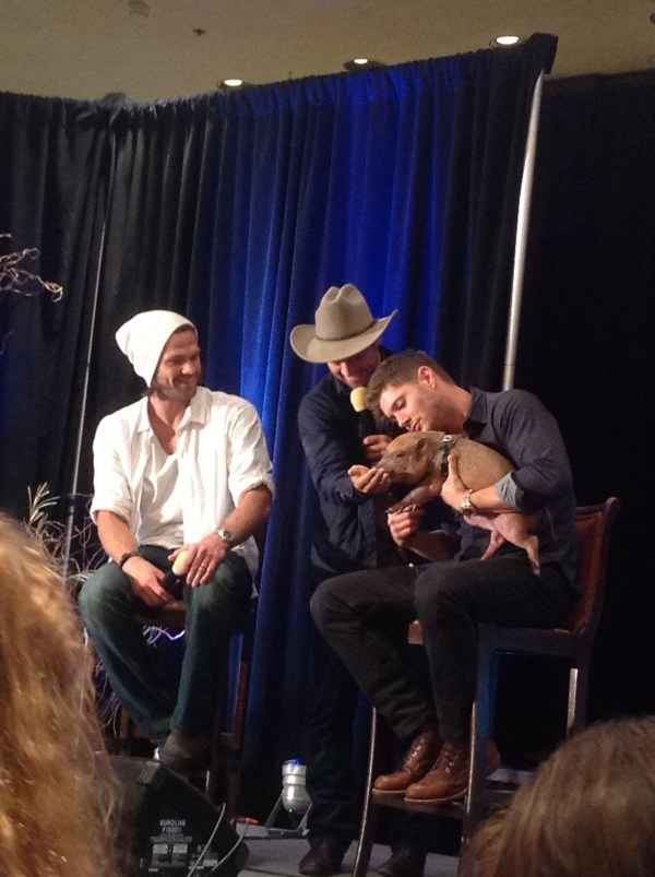 Misha crashes the J2 panel. With a pig.
