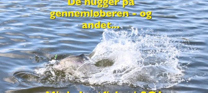 27. maj : Mjøls Lystfiskeri: Nyd sommervejret i SØ1 med hele familien og PowerBait