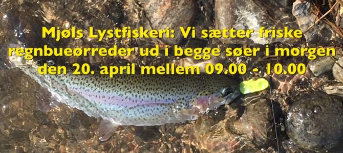– Vi sætter friske fisk ud Påskelørdag