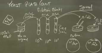 Yeast_expt_plan_P7180004