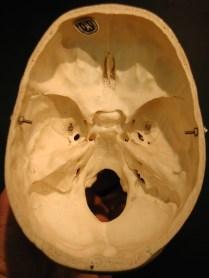 floor of cranium