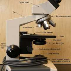 A Well Labelled Diagram Of Microscope Photocell Switch Binocular Features And Care David Fankhauser