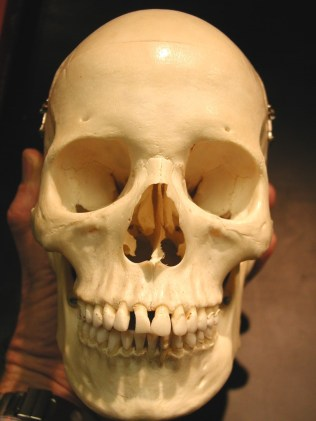 Front View of Skull
