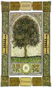Oracle celte des arbres pommier
