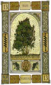 Oracle celte des arbres sureau