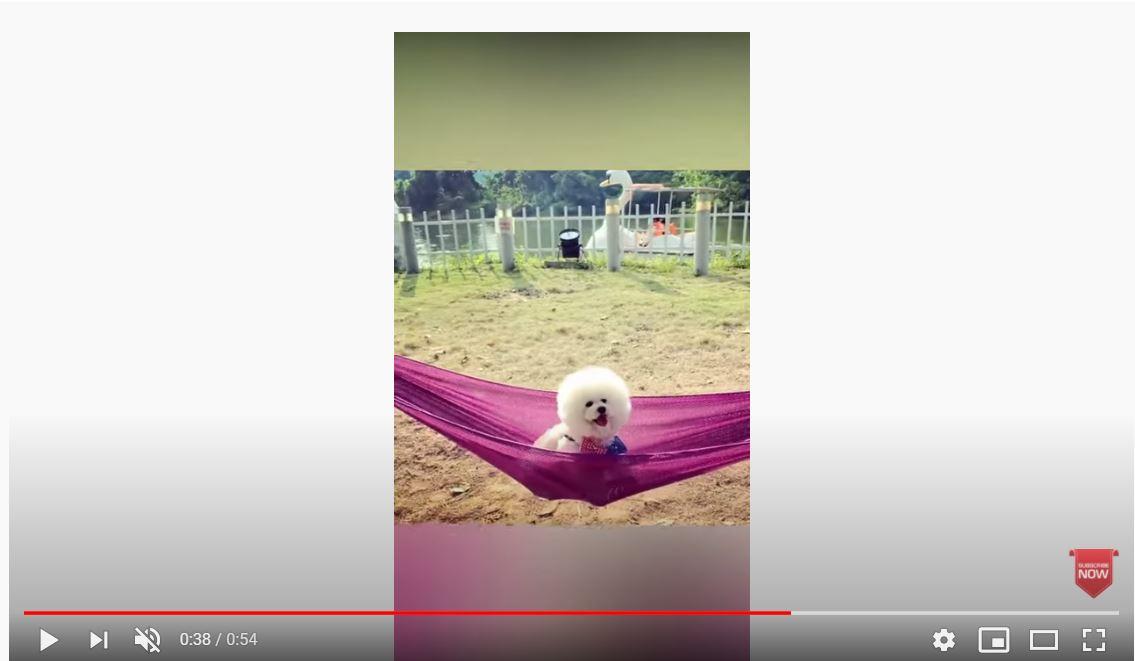 puppy puppydog puppylove puppies videos