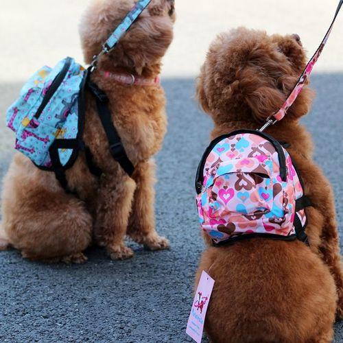 dogaccessories dog
