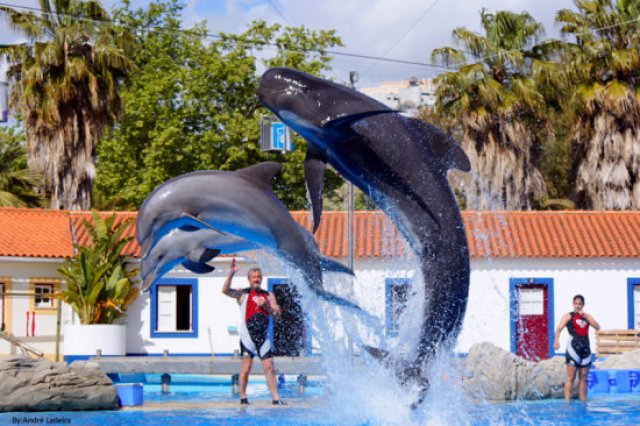 LISBON ZOO - most fascinating zoos