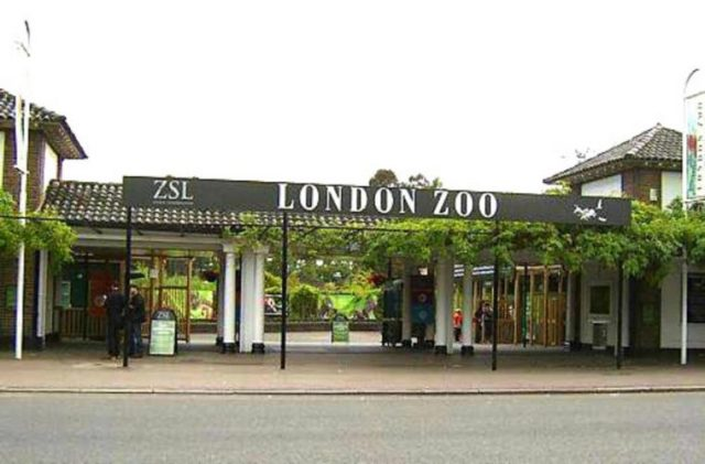 LONDON ZOO - most fascinating zoos