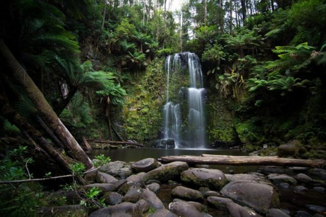 Great Otway National Park - most beautiful forests