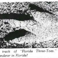 In 1948, a man wore 30-pound, 3-toed lead shoes and stomped around a Florida beach in the night. The footprints lead people to believe that a 15-foot tall penguin was roaming their lands. He kept up the prank for 10 years, visiting various beaches. The hoax wasn't revealed until 40 years later.