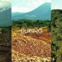 How Did Orange Peels Save an Entire Rain Forest?
