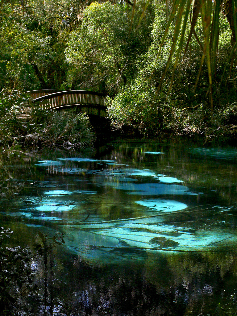 Fern Hammock Springs Florida