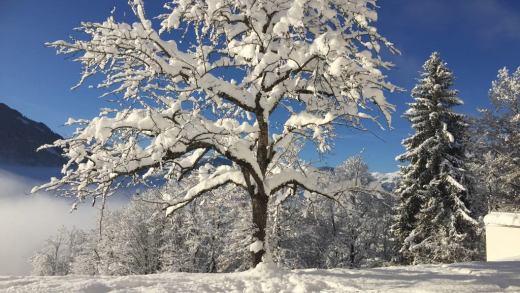 Weerbericht er staat sneeuw op de kaarten