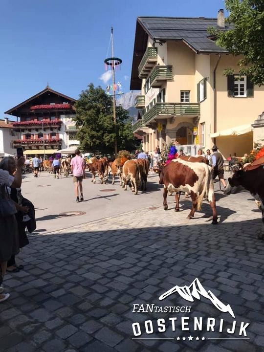 Almabtrieb St Johann in Tirol