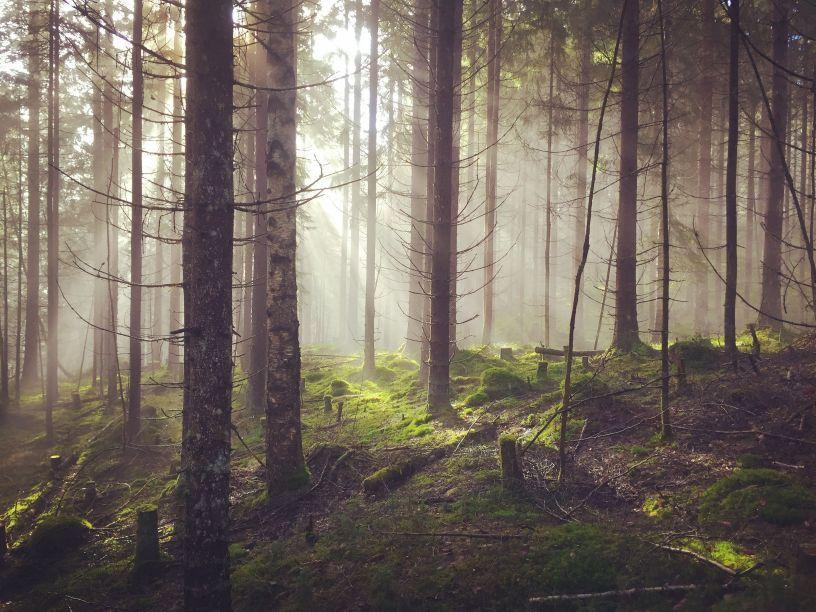 Bilde av skogen på vei til Brennberget - Lillomarka - Oslomarka - Fantastiske marka