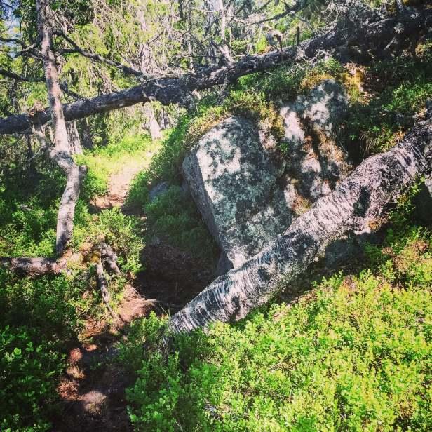 Skogsbilde fra Pershusfjellet om sommeren - Oslomarka - Nordmarka - Fantastiske marka