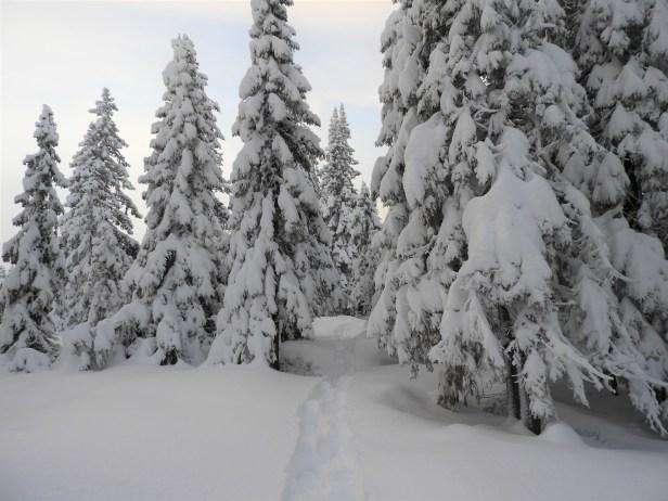 Trugespor i vinterskogen - Oslomarka - Nordmarka - Fantastiske marka