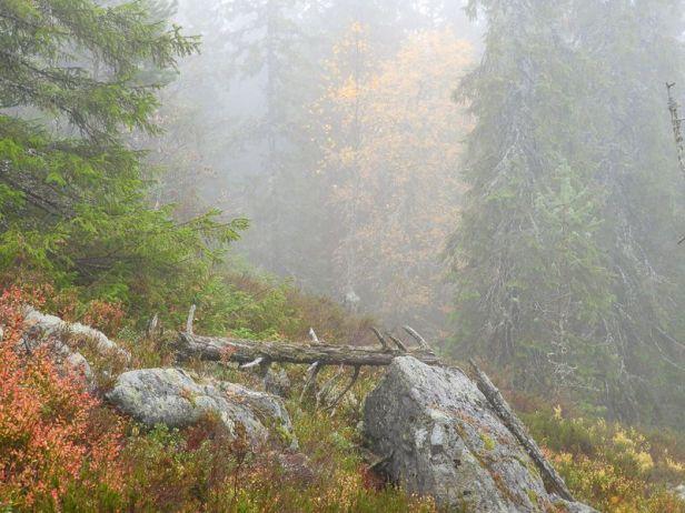 Høstfarger og tåke i Oslomarka - Fantastiske marka