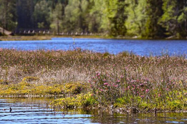 Smalgjermenningen preges av større myrområder - Oslomarka - Romeriksåsene - Fantastiske marka