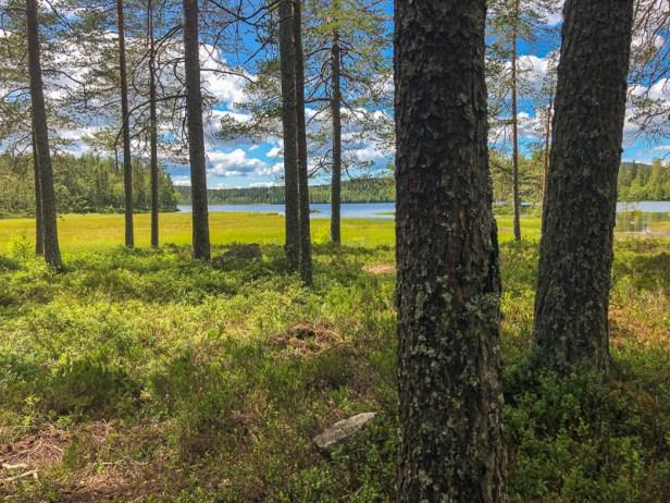 Utsikt mellom trærne til Langvann - Oslomarka - Nordmarka - Fantastiske marka