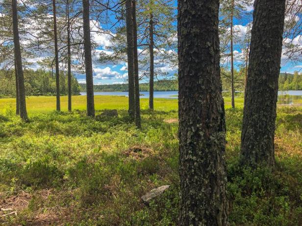 Langvann i Hakadal mellom furutrærne - Oslomarka - Nordmarka - Fantaastiske marka
