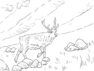 svalbard-reindeer-coloring-page
