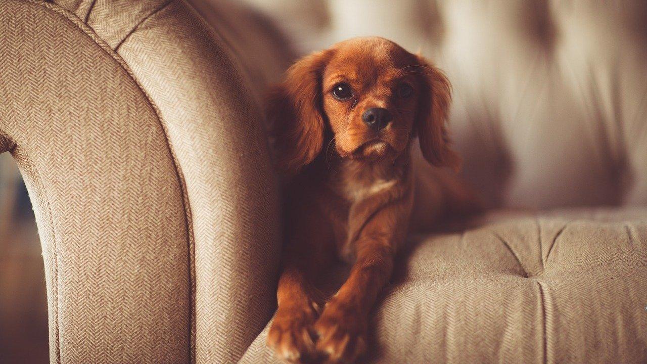 トイストーリーのアンディの犬はバスター犬種は何?シリーズに登場の犬まとめ!