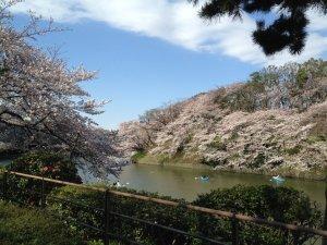 千鳥ヶ淵のお花見ボート