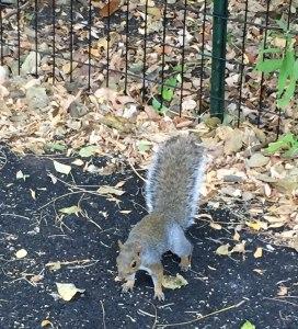 Fantasy Aisle, The pesky Central Park squirrel