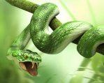 snake-dreams