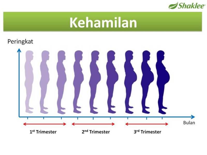 proses hamil