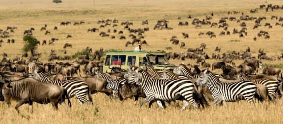 migration-serengeti-safari