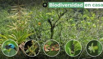 Árbol de limón - Biodiversidad en casa.