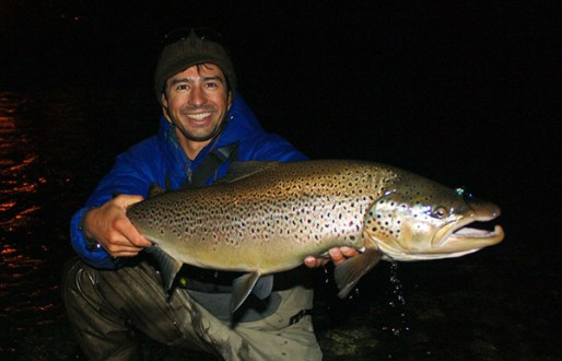 Migratory brown trout on the Limay