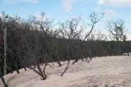 der Wald wird langsam verschluckt..