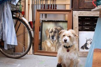 Im Vordergrund: Fritz, im Hintergrund: Rusty, Pastellkreidezeichnung Dog in background: Golden Retriever Rusty, crayon on paper Photo: Bärbel Recktenwald