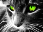 Chaque créature ne perçoit qu'une petite partie du spectre électromagnétique