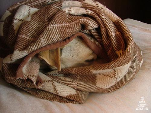 Ceilidh's Nest