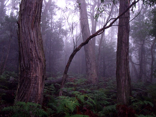 Foggy Forest by K-girl on Flickr
