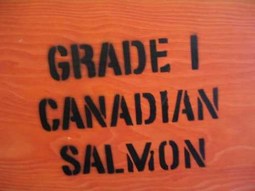 Canadian Salmon Grade