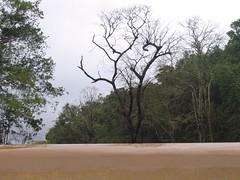 Kollibacchalu Dam -Malenadu Heavy Rain Effects Photography By Chinmaya M.Rao   (86)
