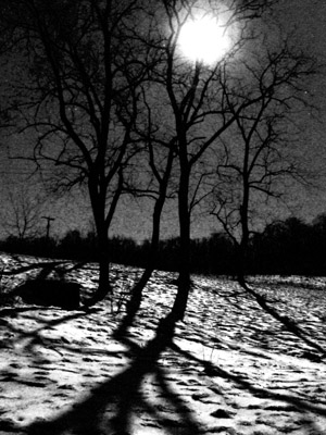The January full moon shining through the trees in the yard